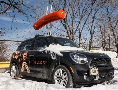 Ditka car dog